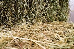 Hay in the Chateau's Stables