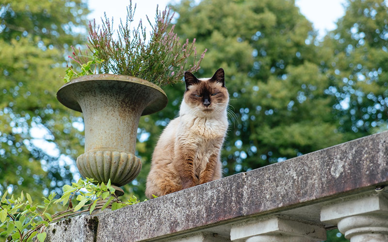 Cat on a wall of the Chateau