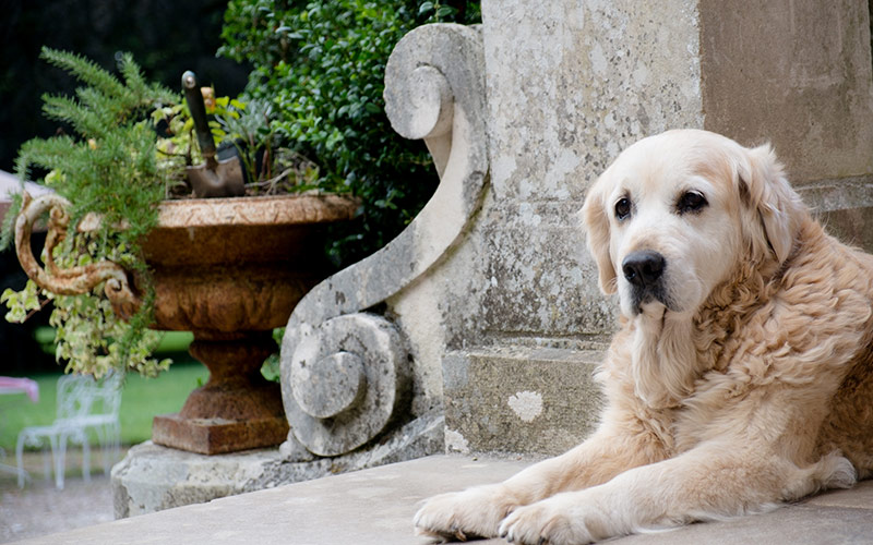 Dog on the terrace of the Chateau
