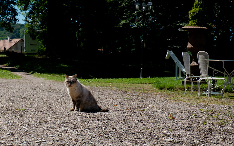 Cat in the park of the Chateau