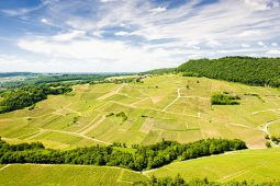 Franche Comte Vineyards